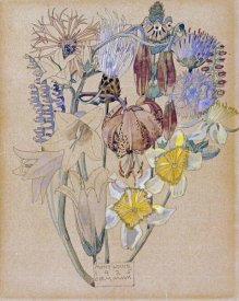 Charles Rennie Mackintosh - Mont Louis - Flower Study