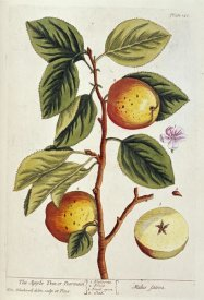 Elizabeth Blackwell - Apple Tree