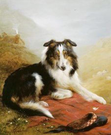 Edwin Douglas - A Collie, The Guardian of The Flock