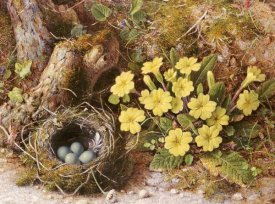 William B. Hough - Still Life With a Bird's Nest