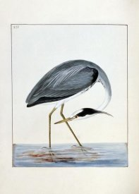 William Lewin - Heron
