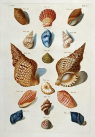 Franz Michael Regenfuss - A Selection of Seashells