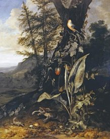 Matthias Withoos - Forest Floor With a Toad and a Lizard