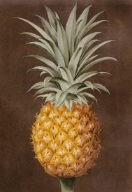 George Brookshaw - Pineapple