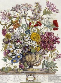Robert Furber - October - Twelve Months of Flowers