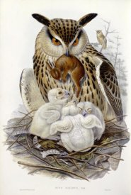 John Gould - A Great Owl and Chicks