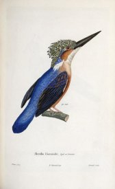 Cyrille Pierre Theodore Laplace - Malagasy Kingfisher