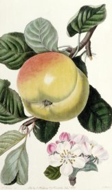 John Lindley - Apple