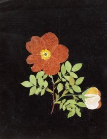Margaret Nash - Cut Out Watercolour of a Flower