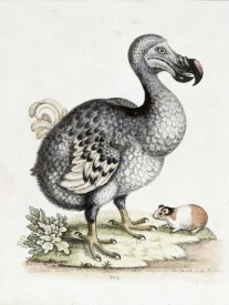Frederick P. Nodder - The Dodo