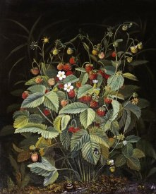 Otto Diderich Ottesen - Wild Strawberries