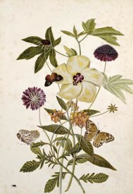 Thomas Robins Jr. - Milkweed, Poppy and Hibiscus