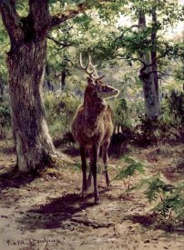 Rosa Bonheur - Stag On Alert, In Wooded Clearing