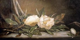 Martin Johnson Heade - White Magnolias On a Blue Cloth
