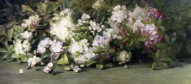 Adelaide Coburne Palmer - Mountain Laurel