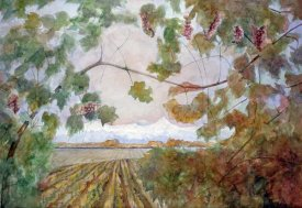Eduardo Audivert - Amongst the Vineyards