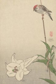 Baison - Small bird on lily plant., 1893