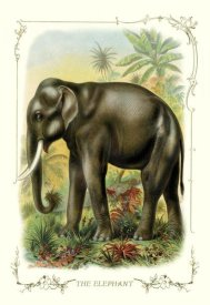 Unknown - The Elephant, 1900