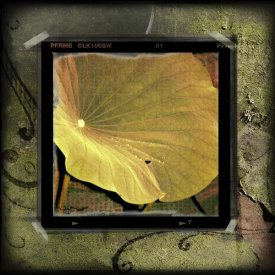 Suzanne Silk - Yellow Lotus