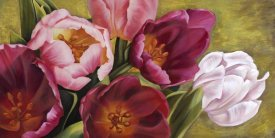 Jenny Thomlinson - My Tulips