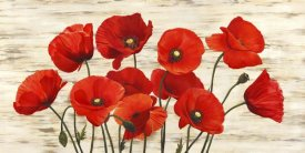 Serena Biffi - French Poppies