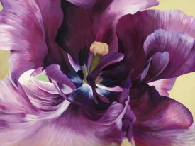 Luca Villa - Purple tulip close-up