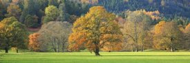 Unknown - Mixed trees in autumn colour, Scotland