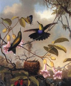 Martin Johnson Heade - Fork Tailed Woodnymph