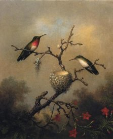 Martin Johnson Heade - Ruby Throated Hummingbird