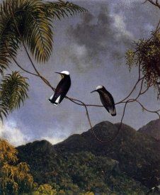 Martin Johnson Heade - Snowcap