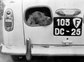 Anonymous - Dog Peering From Hole in Rear of Car, 1957