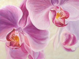 Cynthia Ann - Purple Orchids