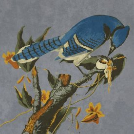 BG.Studio - Audubon Decor - Bluejay Detail