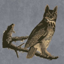 BG.Studio - Audubon Decor - Horned Owl Detail