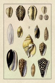 G.B. Sowerby - Shells: Convoltae and Orthocerata