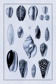 G.B. Sowerby - Shells: Convoltae and Orthocerata (Blue)