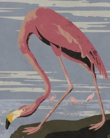 BG.Studio - Audubon Decor - American Flamingo