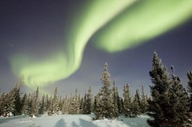 Matthias Breiter - Northern lights or aurora borealis over boreal forest, North America