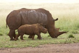 Matthias Breiter - White Rhinoceros mother and calf, Rhino and Lion Nature Reserve, South Africa