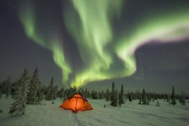 Matthias Breiter - Northern lights or aurora borealis over illuminated tent, boreal forest, North America