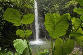 Murray Cooper - Waterfall in lowland tropical rainforest, Ecuador