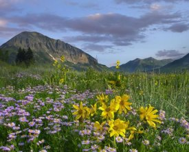 Tim Fitzharris - Meadow of Orange Sneezeweed and Smooth Aster, Gothic Mountain in distance, Colorado