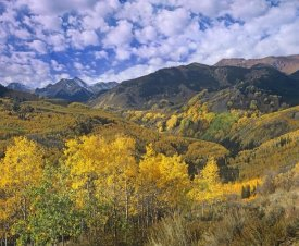 Tim Fitzharris - Quaking Aspen in autumn, Colorado