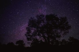 Tim Fitzharris - Starry sky with silhouetted Oak tree
