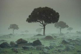 Tim Fitzharris - Rain storm on the Serengeti Plains, Kenya