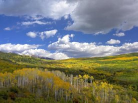 Tim Fitzharris - Gunnison National Forest in fall, Colorado