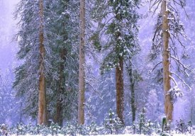Tim Fitzharris - Winter in Yosemite National Park, California