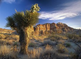 Tim Fitzharris - Joshua Tree at Red Rock State Park, California