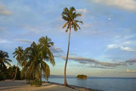 Tim Fitzharris - Coconut Palm trees on Pamilacan Island, Philippines