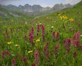 Tim Fitzharris - Indian Paintbrush meadow at American Basin, Colorado